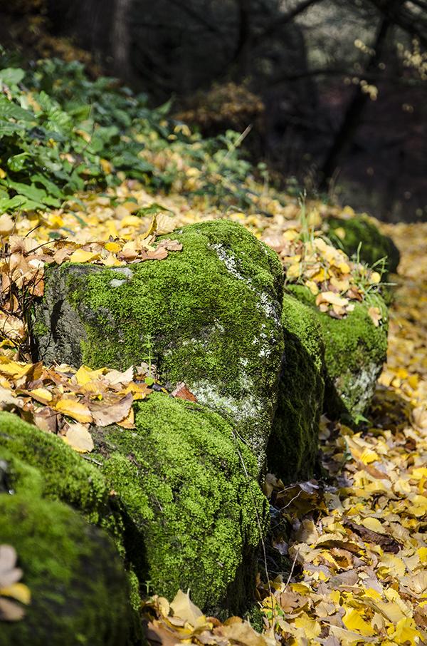 Botanic Gardens in Autumn
