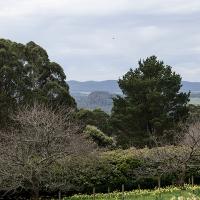Interview * Ard Choille Heritage Gardens * Helen Cottew